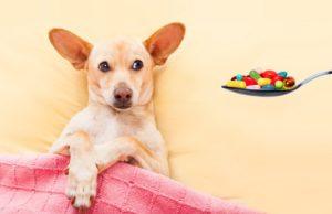 Most Essential Dog Meds
