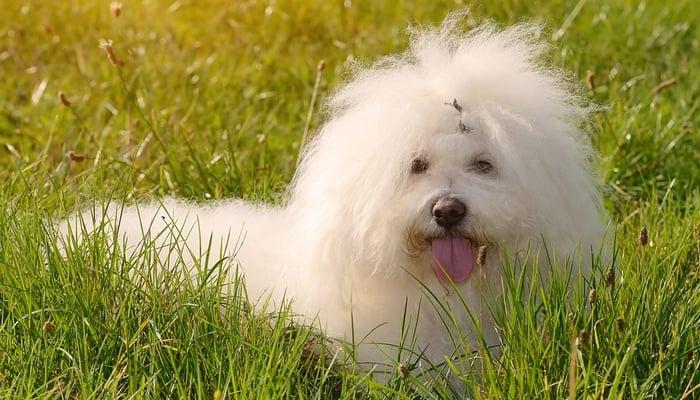 Most Quiet Dog Breeds