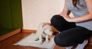 Puppy Potty Training Hacks