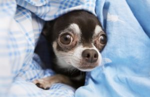 Relieve Anxiety in Dogs