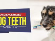 Science-Based Dog Teeth Care Tips