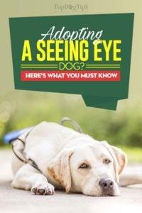 Seeing Eye Dog Adoption