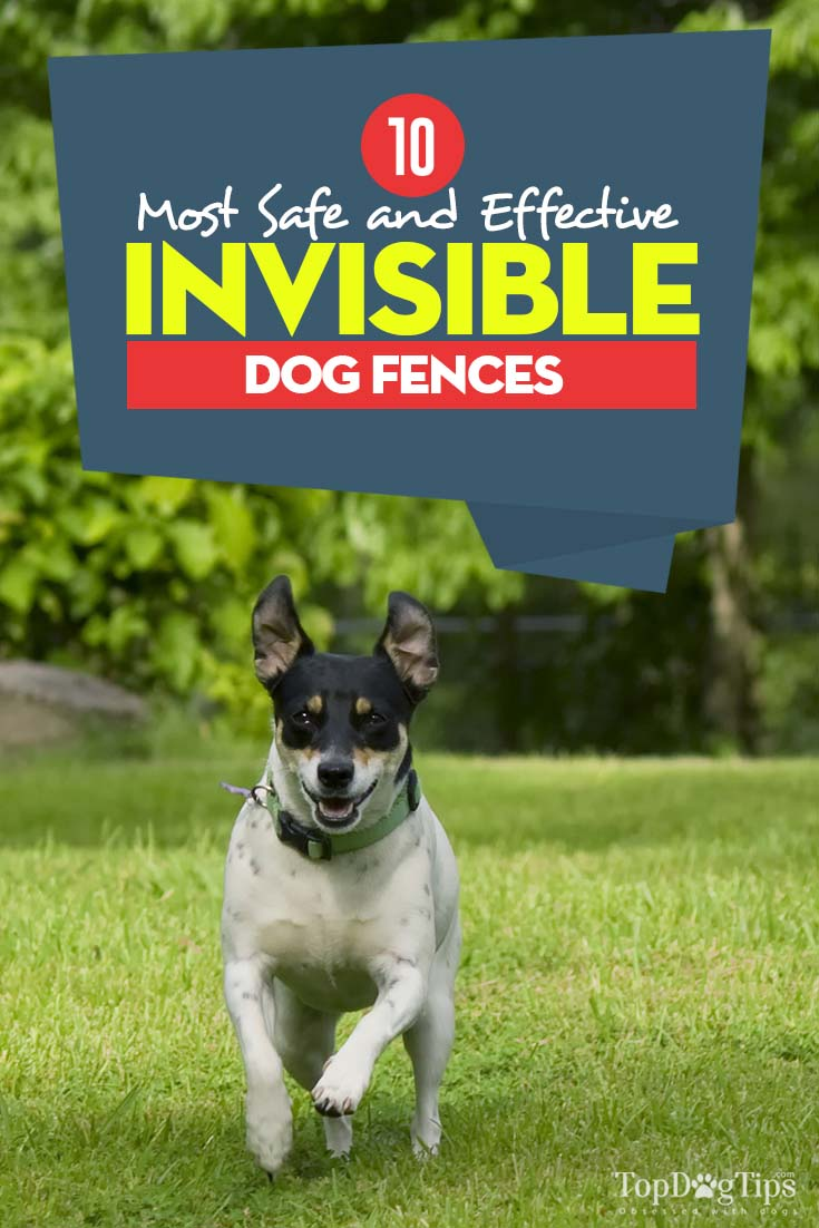Top 10 Best Invisible Dog Fence for Dogs Safe Containment (2018)