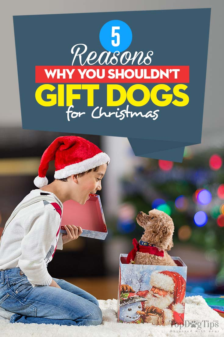 The 5 Reasons Why You Shouldn't Gift Dogs for Christmas