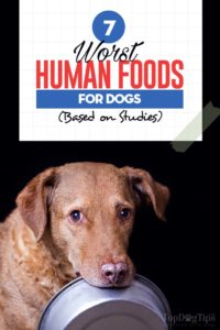 The 7 Worst Human Foods Dogs Can't Eat