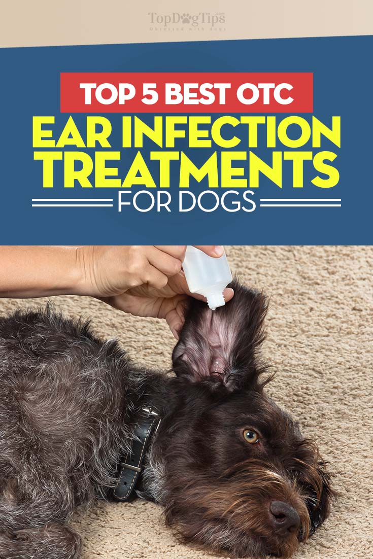 Best Antibiotic For Dog Ear Infection