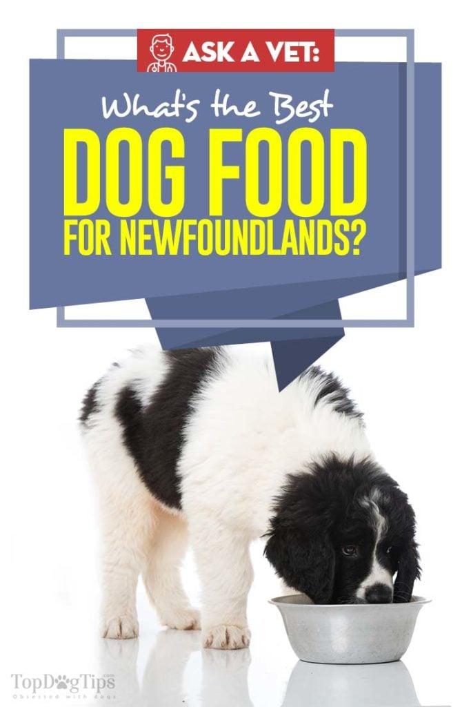 The Best Dog Food for Newfoundland - Top 10 Vet Recommended Brands