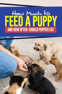 Tips on How Much to Feed a Puppy and How Often Should Puppies Eat