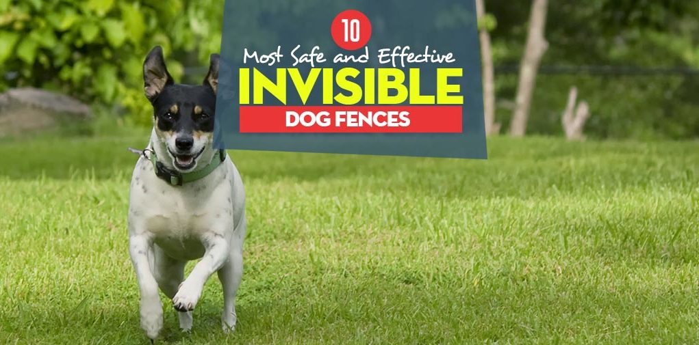 10 Best Invisible Dog Fence For Dogs Safe Containment In 2019