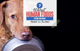 Top 7 Worst Human Foods for Dogs (Based on Studies)
