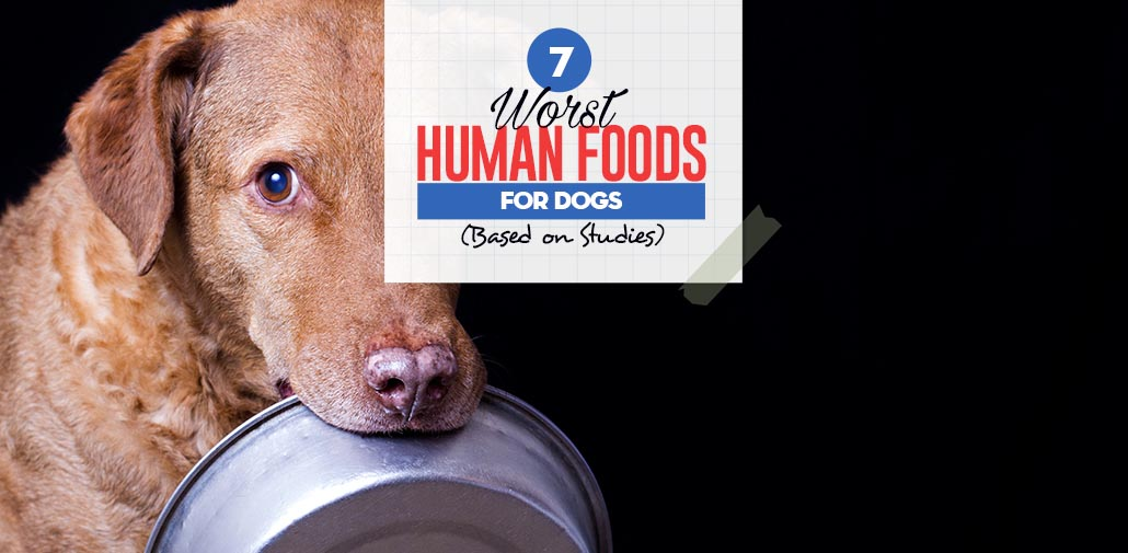Top Worst Foods For Dogs