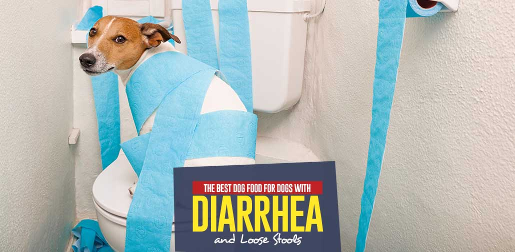 What Food Do You Give A Dog With Diarrhea