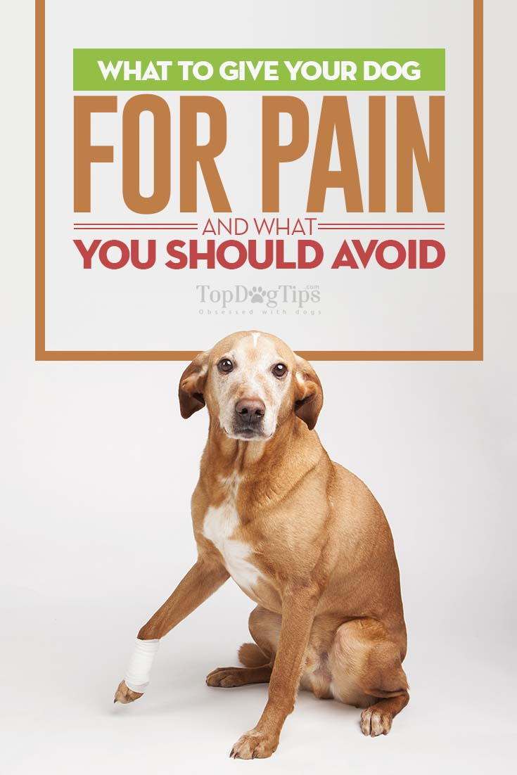 What Medicine Can You Give Dogs For Arthritis