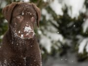 Winter Allergies In Dogs