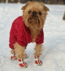 best dog boots for winter