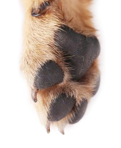 The Best Dog Paw Cream