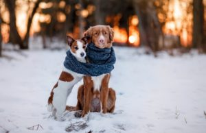 things to keep dogs warm in winter