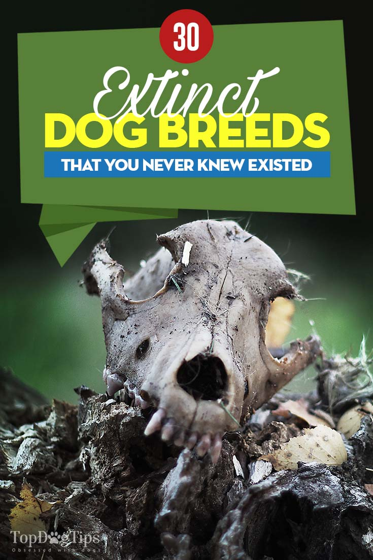 30 Extinct Dog Breeds That You Never Knew Existed