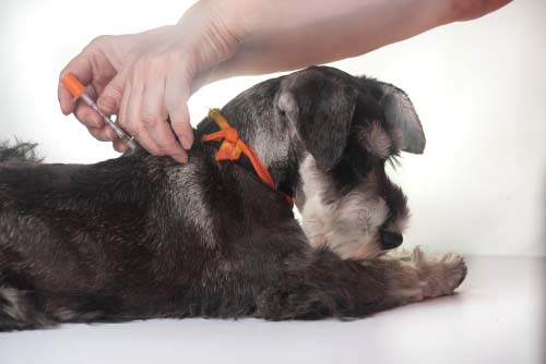 4 Targeted Treatments of Winter Allergies in Dogs