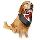PetFavorites Dog Tuxedo Bandana