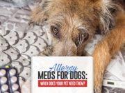 Allergy Meds For Dogs Guide