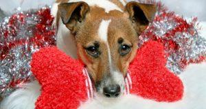 Best Christmas Dog Toys