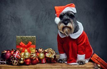Best Dog Christmas Dress