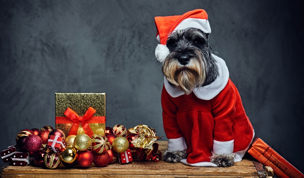 top 13 best dog christmas dress choices for holidays in 2017