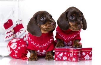 Best Dog Christmas Sweater