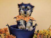 Best Holiday Dog Collars