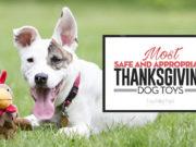 Best Thanksgiving Dog Toys 2018