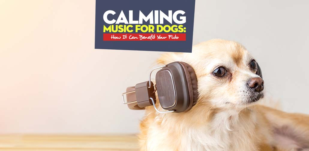 Calming Music for Dogs Guide
