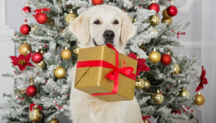 Cheapest Christmas Gifts for Dogs