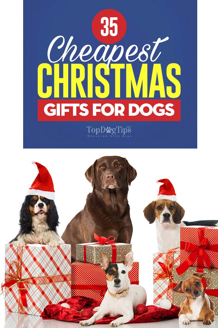 34 Cheapest Christmas Gifts for Dogs – Dog Couture Country