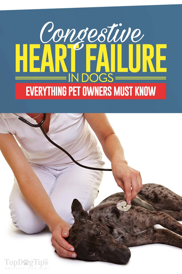 Acute Congestive Heart Failure Life Expectancy in Dogs