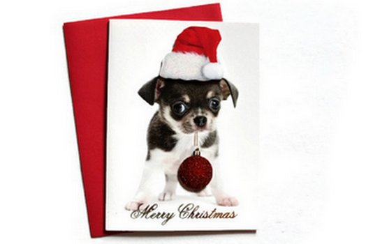 Christmas Holiday Boxed Animal Greeting Cards