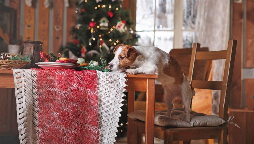 Dogs Christmas Dinner Ideas