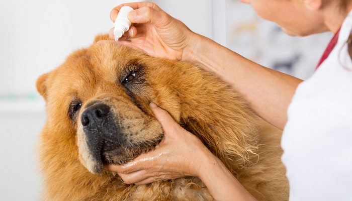 Can U Use Antibiotic Ointment On Dogs