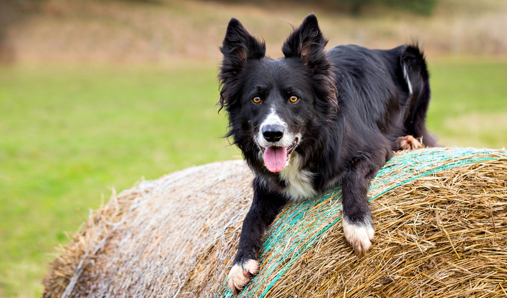 Dogs can practice natural herding talents on Wisconsin ... |Small Dogs Farm