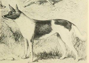 Fuegian Dog