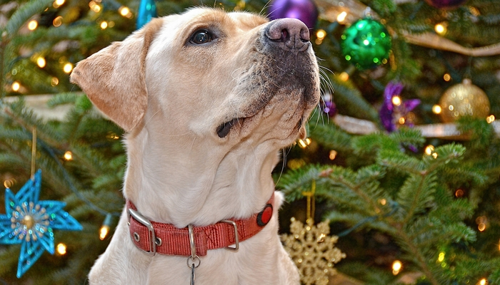 How to Keep Dog Away from Christmas Tree This Holiday Season