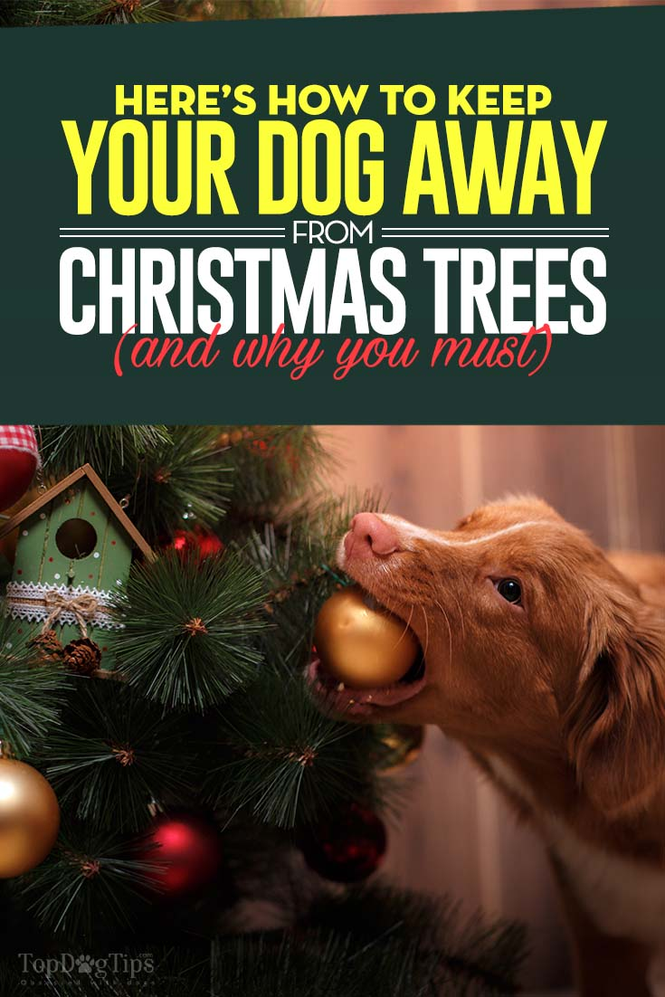 How to Keep Dogs Away from Christmas Tree