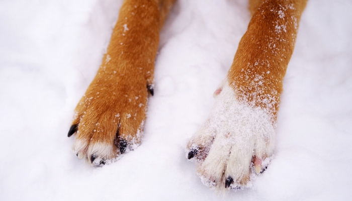Keep Your Dog Healthy During Winter Months