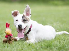 Thanksgiving Dog Toys