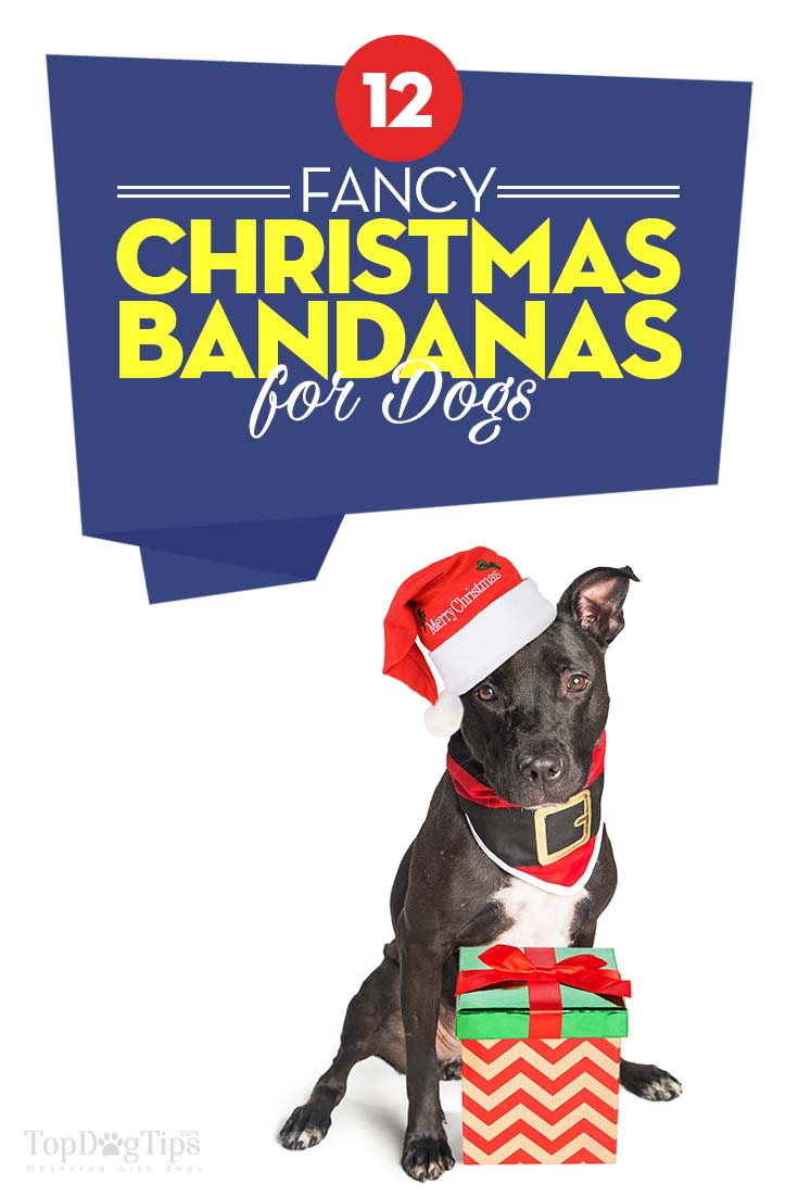 Top 12 Best Christmas Dog Bandanas To Dress Up Your Fido