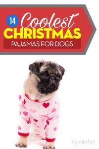 The Best Christmas Dog Pajamas