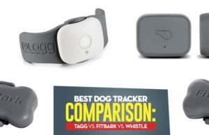 The Best Dog Tracker Comparison