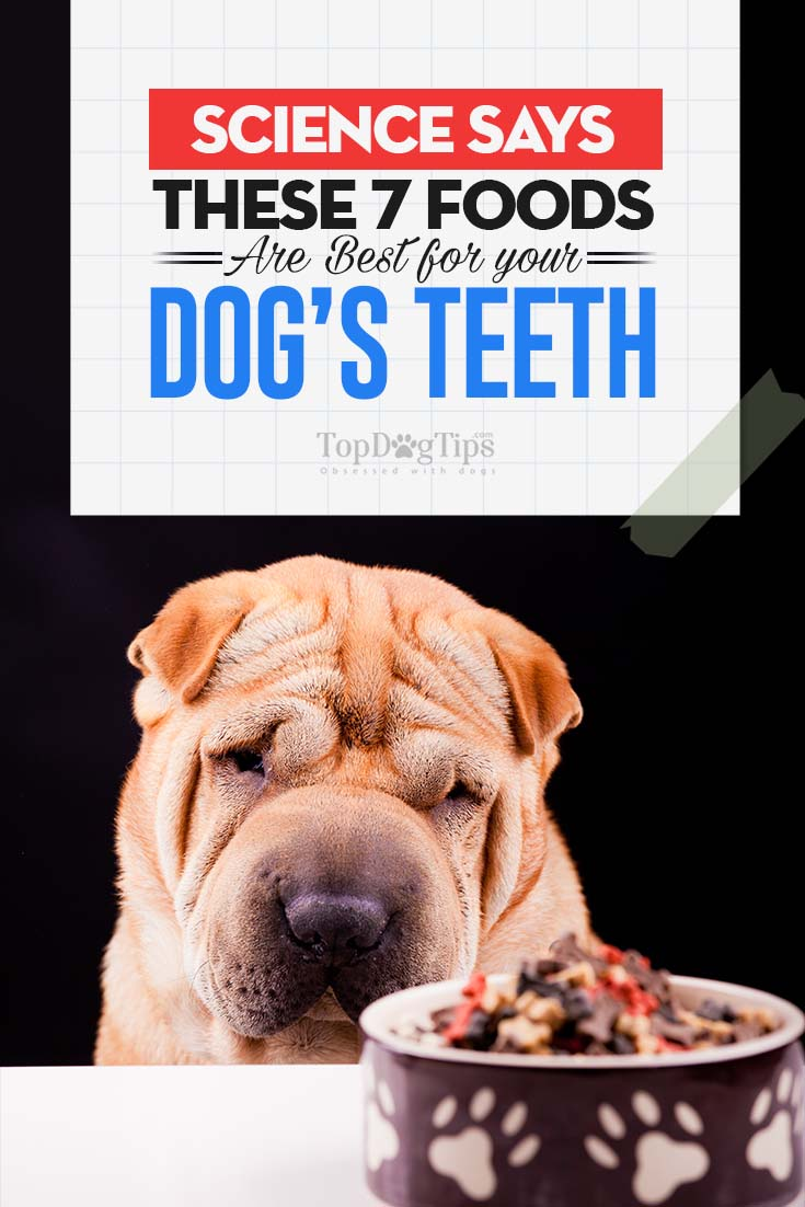 Foods To Treat Diarrhea In Dogs