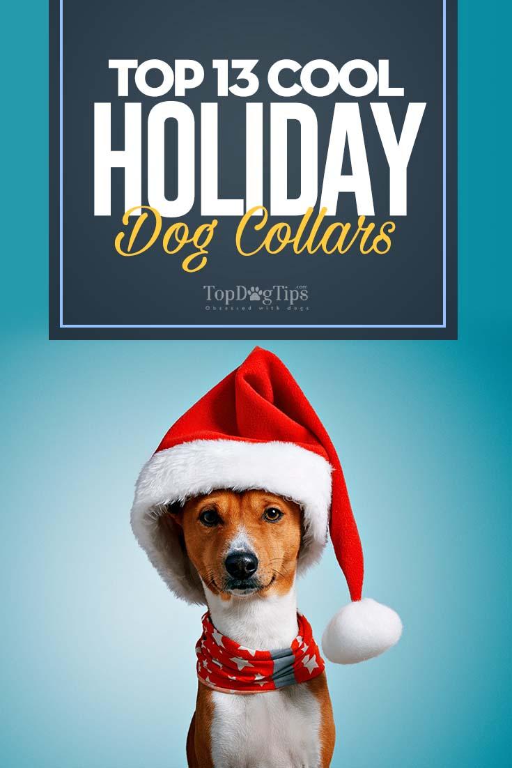 The Most Festive Holiday Dog Collars