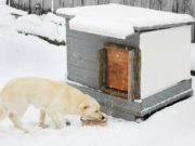 Things to Know When Keeping Dogs Outside in Winter
